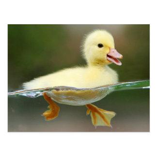 Cartão Postal Cute Recuas Chick