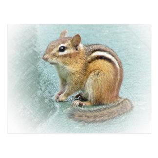 Cartão Postal Cutie listrado - Chipmunk
