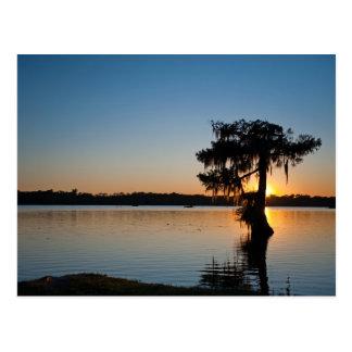 Cartão Postal Cypress no por do sol