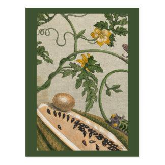 Cartão Postal Da fruta da melancia vida botânica ainda