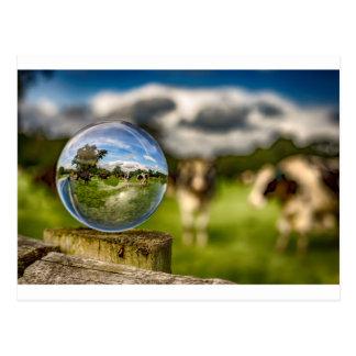 Cartão Postal Da grama ao vidro