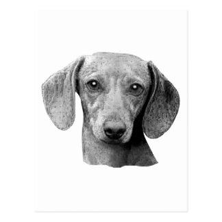 Cartão Postal Dachshund - imagem estilizado