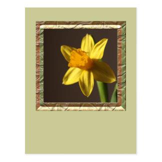 Cartão Postal Daffodil do primavera