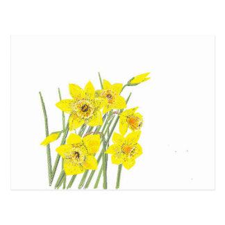 Cartão Postal Daffodils bonito