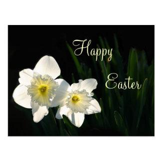 Cartão Postal Daffodils da páscoa