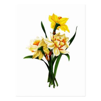 Cartão Postal Daffodils ou narciso por Pierre Joseph Redoute