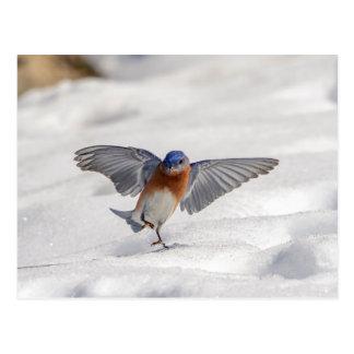Cartão Postal Dança oriental do Bluebird na neve