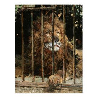 Cartão Postal Daniel Hernández Morillo: Na gaiola do leão