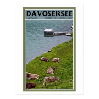 Cartão Postal Davos - vacas ao longo das proximidades do lago