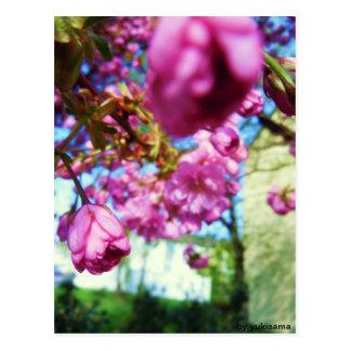 Cartão postal - de flores Rosas