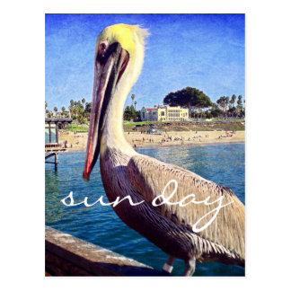 """Cartão Postal De """"foto do pelicano do cais da praia da"""