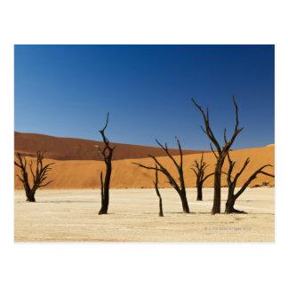 Cartão Postal Deadvlei famoso com árvores inoperantes, deserto 3