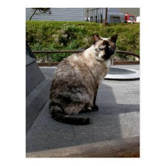 Cartão Postal Debbie o gato do barco