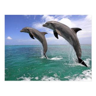 Cartão Postal Delfin, Delfim, Tuemmler mais bruto, Tursiops 4