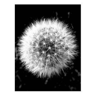 Cartão Postal Dente-de-leão preto e branco