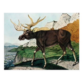 Cartão Postal Der Elch ou o alce (1886)
