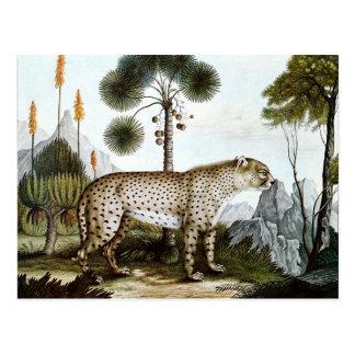 Cartão Postal Der Gepard ou a chita (1886)