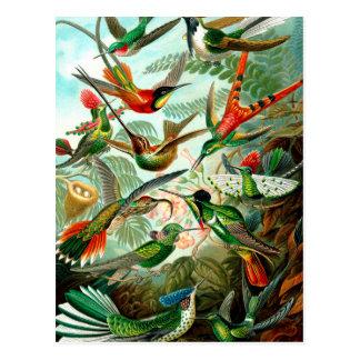 Cartão Postal Der Natur de Ernst Haeckels Kunstformen do
