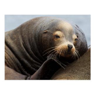 Cartão Postal Descanso do leão de mar de Califórnia