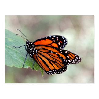 Cartão Postal Descanso do monarca