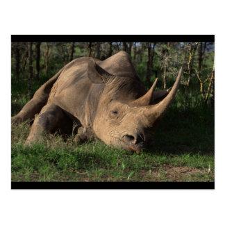 Cartão Postal Descanso do rinoceronte