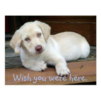 Cartão Postal Desejo você estava aqui filhote de cachorro