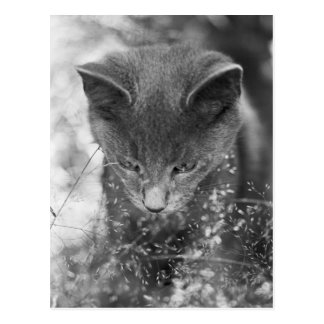 Cartão Postal Desengaço cinzento do gato