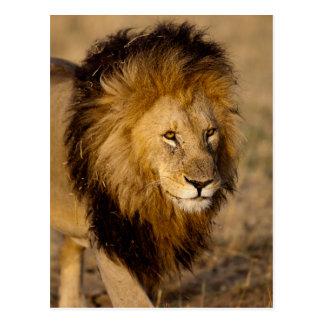 Cartão Postal Desengaço do leão