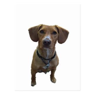 Cartão Postal Desenho Cão