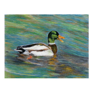 Cartão Postal Desenho de lápis colorido pato do pato selvagem