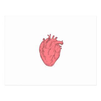 Cartão Postal Desenho humano da anatomia do coração