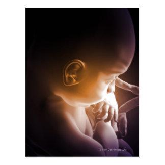 Cartão Postal Desenvolvimento embrionário 5