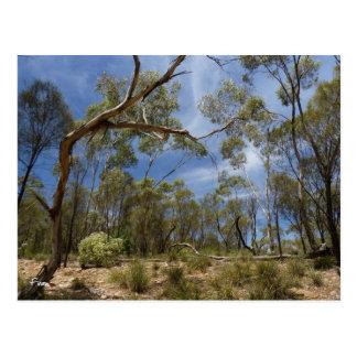 Cartão Postal Desfiladeiro do jacaré, Sul da Austrália