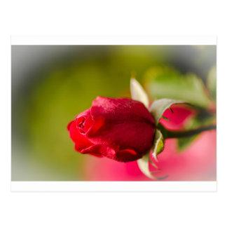 Cartão Postal Design ascendente próximo da rosa vermelha