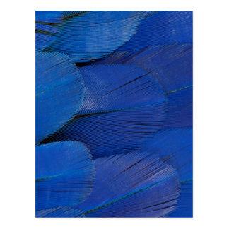 Cartão Postal Design azul da pena do Macaw do jacinto
