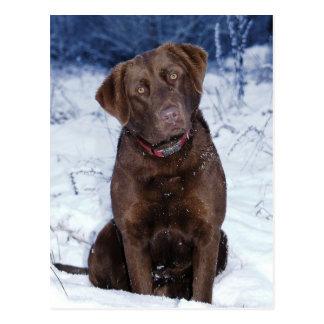 Cartão Postal Design bonito do cão de Brown