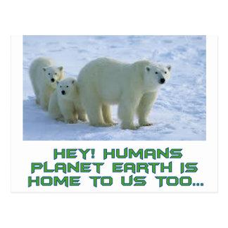 Cartão Postal design legal do urso polar