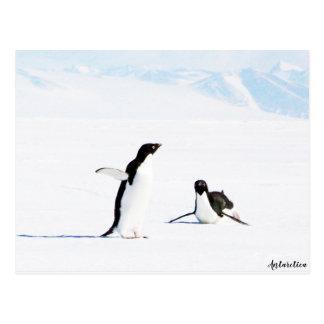 Cartão Postal Deslizando o pinguim e o amigo de Adelie