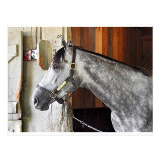 Cartão Postal Destin - abrigo do cavalo