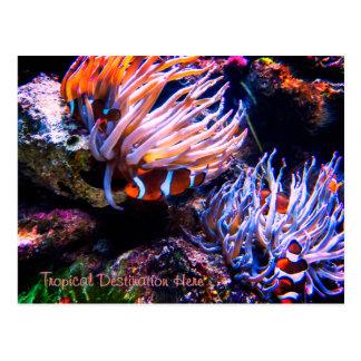Cartão Postal Destino feito sob encomenda de Clownfish