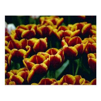 Cartão Postal detalhe amarelo de flores recentemente