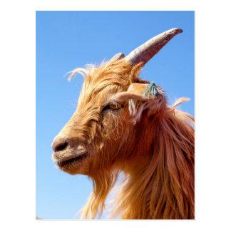 Cartão Postal Detalhe da cabeça da cabra de caxemira