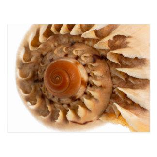 Cartão Postal Detalhe do macro do escudo do mar