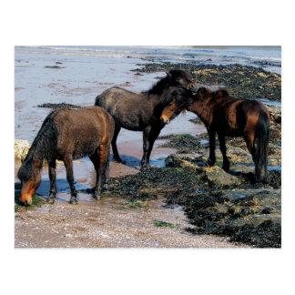 Cartão Postal Devon sul três pôneis de Dartmoor que jogam na