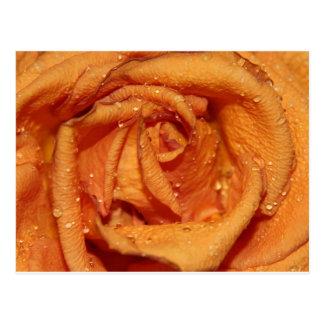 Cartão Postal Dewdrops cor-de-rosa da laranja