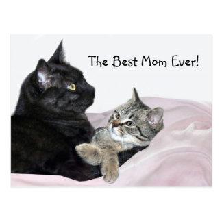 Cartão Postal Dia das mães felino