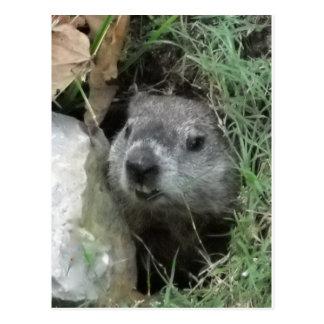 Cartão Postal Dia de Groundhog