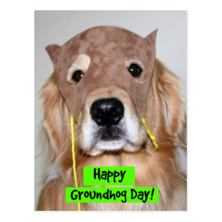 Cartão Postal Dia de Groundhog do golden retriever