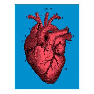 Cartão Postal Dia dos namorados anatômico do coração do vintage