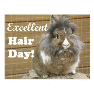 """Cartão Postal """"Dia excelente engraçado do cabelo"""" para o coelho"""